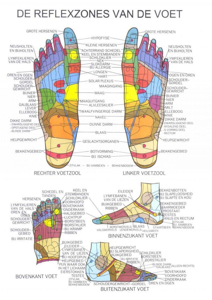 Relfexzonzes van de voet